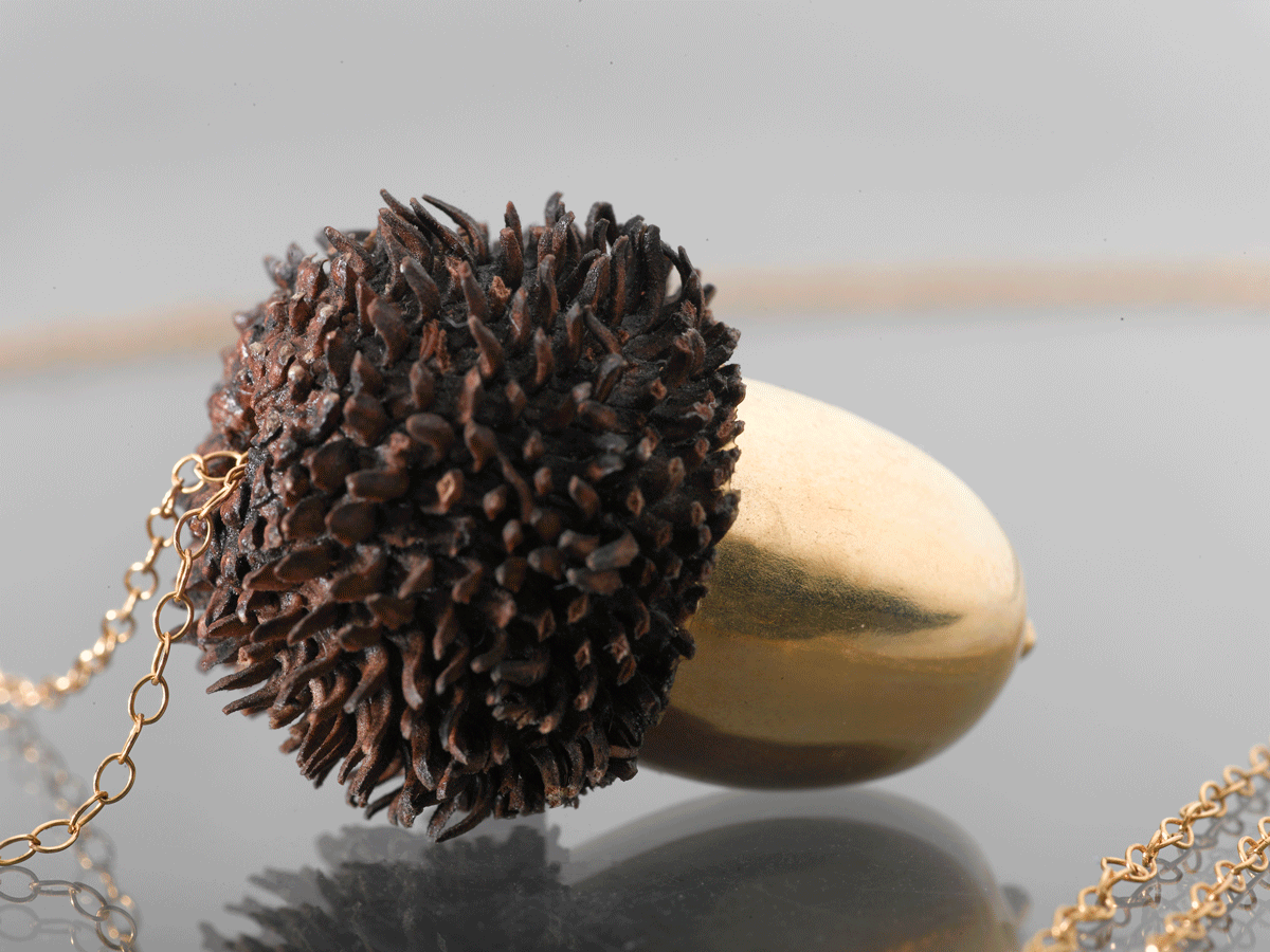 A real Acorn plated in 24k gold.
